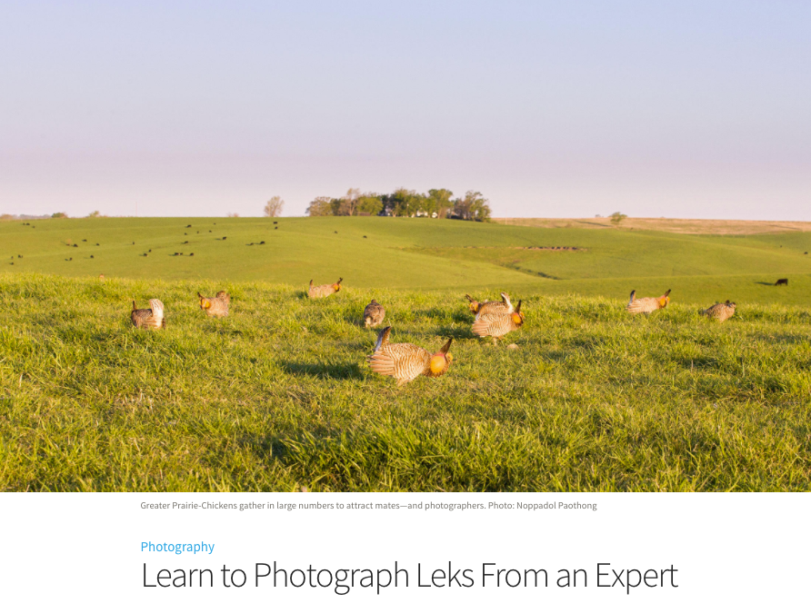 """""""Learn to Photograph Leks from an Expert"""" – article on Audubon"""