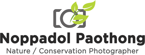 Noppadol Paothong Photography