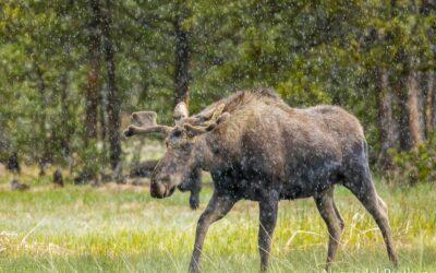 Yellowstone National Park, Wonder of Nature